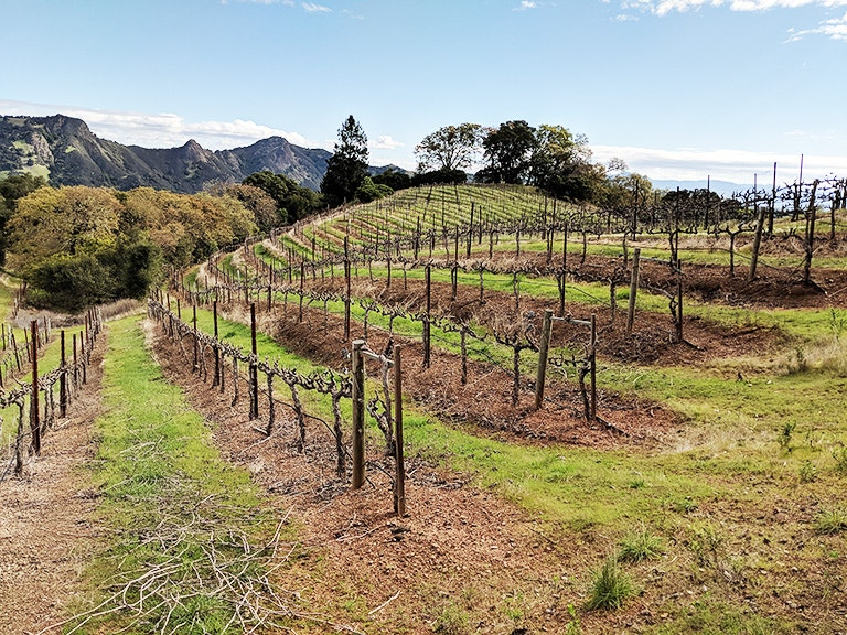 BACA Rockpile Vineyard Terroir