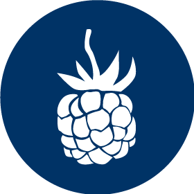 Blue Icon of a Pomegranate